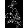 flowers - Uncategorized -