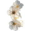 flowers - Uncategorized -