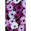flowers photo - Uncategorized -