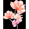 flowers transparent - Plants -