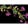 flower vine - Rośliny -