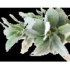 foliage - Items -