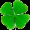 four leaf clover - 植物 -