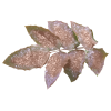 frosty leaves - Objectos -