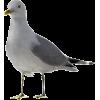galeb - Animals -