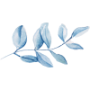 gałązka - 植物 -