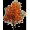 Tree Red - 植物 -