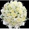 Flowers Beige Plants - Plants -