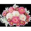 Flowers Pink Plants - Biljke -
