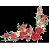 Flowers Colorful Plants - Plants -