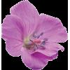Flowers Purple Plants - Plants -
