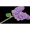 Flowers Purple Plants - Pflanzen -