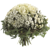 Flowers Green Plants - 植物 -