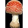 Mushroom - Biljke -