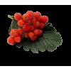 Flower Red Plants - Plants -