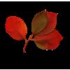 Flower Red Plants - 植物 -