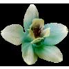 Flower Green Plants - 植物 -