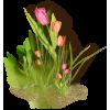 Flowers Plants Green - Biljke -