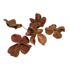 Flowers Plants Brown - Plants -