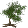 Tree - Piante -
