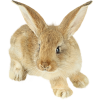 Animals Beige - Tiere -