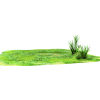 grass 2 - Plants -