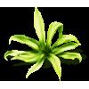 Grass Green Plants - Plants -