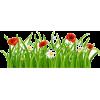 grass - Illustrations -