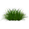 grass - Natureza -
