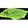 grass  - Plants -