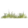 grass flower plants  - 植物 -