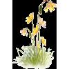 grass flower plants yellow - Plants -