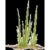 green grass sand rocks - Plantas -