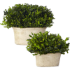 green potted plants - Pflanzen -