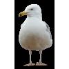 gull - Nature -