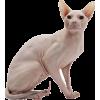 hairless cat - Animals -