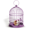 hamster - Animals -
