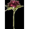 hydrangea flower - Plants -