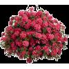 Plants - Biljke -