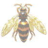insect - Uncategorized -
