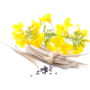 item - Piante -