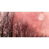 items - Natura -