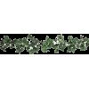 ivy vine - Plants -