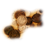 Coins - Items -