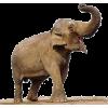 Elephant - Animals -