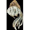Fish - Animais -