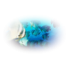 Fishes - 動物 -