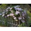 Garden - Priroda -