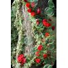 Garden - Nature -
