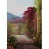 Garden - Natur -